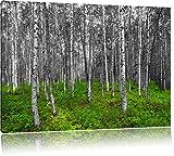 kleiner ansehnlicher Birkenwald schwarz/weiß Format: 120x80 auf Leinwand, XXL riesige Bilder fertig gerahmt mit Keilrahmen, Kunstdruck auf Wandbild mit Rahmen, günstiger als Gemälde oder Ölbild, kein Poster oder Plakat