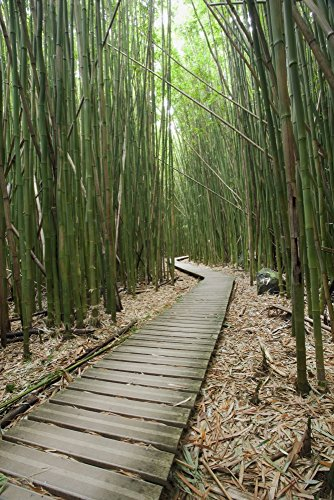 Jenna Szerlag/Design Pics - Hawaii Maui Kipahulu Haleakala National Park Trail Through Bamboo Forest on The Pipiwai Trail. Photo Print (60,96 x 96,52 cm)