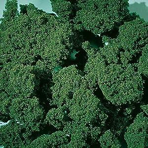 Auhagen 76.977,0 - Espuma Moss, Medio, de 1000 ml, la Hoja Verde