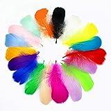 Tukcherry Plumes Colorées, 250pcs Naturel Multicolore Plume Décoration pour DIY Arts Crafts, Idéal pour Costumes, Chapeaux, D