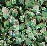 Künstliche haselnuss Leaf Screening Garten Sichtschutz–1m x 3m