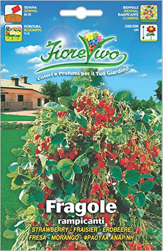 Hortus 60sdff014 fiorevivo fragole rampicanti, 13x0.2x20 cm