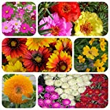 #6: Only For Organic Six Summer Flower Seeds(400+ Seeds) With Cocopeat Block And Instruction Manual