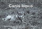Canis lupus (Tischkalender 2019 DIN A5 quer): Impressionen in schwarz-weiss aus dem Leben der Wölfe (Monatskalender, 14 Seiten ) (CALVENDO Tiere)