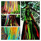 SwansGreen 100pcs/bag rare Rainbow Eucalyptus deglupta seeds,showy tropical tree seeds, eucalyptus plant for garden plant