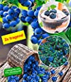 BALDUR-Garten Heidelbeeren 'Hortblue' Blaubeeren Heidelbeeren Pflanze, 1 Pflanze Vaccinium Hortblue Petite 2x tragend von Baldur-Garten bei Du und dein Garten