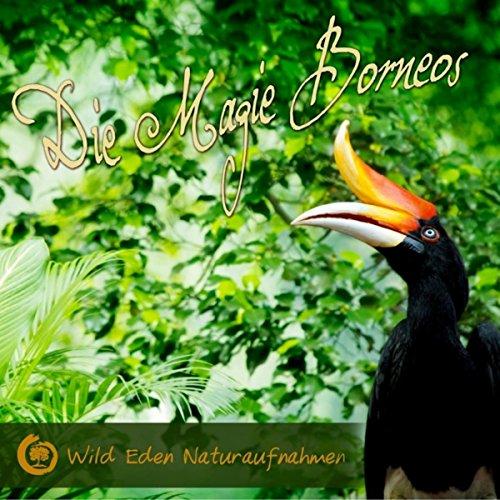 Gibbon Zeit (6 Uhr Morgens) im Taman Nasional Sebangao (Morgendliches Konzert der kleinen Menschenaffen) [Naturklänge für Meditation und Balance des Lebens]