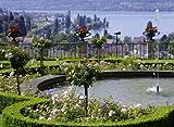 Rosentr?ume am Bodensee: Momente der Harmonie und Poesie