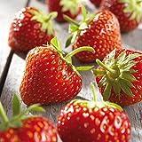 Besser Erdbeeren; 1000 g