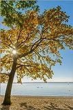 Posterlounge Acrylglasbild 120 x 180 cm: Stern im Herbstbaum von Denis Feiner - Wandbild, Acryl Glasbild, Druck auf Acryl Glas Bild