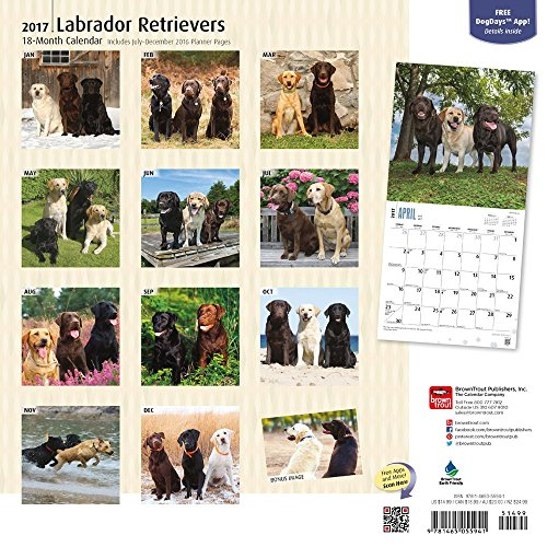 preisvergleich labrador retrievers 2017 18 monatskalender mit freier willbilliger. Black Bedroom Furniture Sets. Home Design Ideas