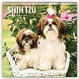 Shih Tzu 2018 - 18-Monatskalender mit freier DogDays-App: Original BrownTrout-Kalender [Mehrsprachig] [Kalender] (Wall-Kalender)