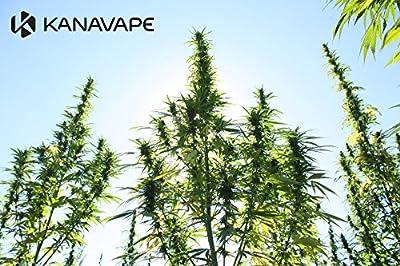 10ml Satijah Premium E-LIQUID mit 50 mg CBD Cannabidiol - Cannabis sativa / Hanf-Geschmack für E-Zigaretten (nikotinfrei) von Satijah