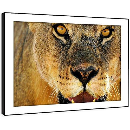 ild Wand-Kunstdruck - (Brown Lioness Gesicht Roar orange) Modernes Tier Wohnzimmer Schlafzimmer Stück Wohnkultur Leicht Hang Guide (58x41cm) (Lioness-bild)