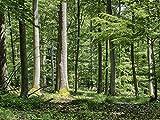 Artland Qualitätsbilder I Wandtattoo Wandsticker Wandaufkleber 80 x 60 cm Landschaften Wald Foto Grün B5UY Sommertag Wandertag