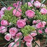 Kletterrose 'Mini Eden Rose' - Hellrosa blühende Topfrose im 6 L Topf - frisch aus der Gärtnerei - Pflanzen-Kölle Gartenrose