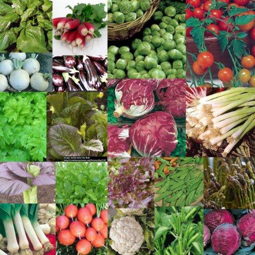 20-packs-of-vegetable-seed-carrot-lettuce-tomato-etc