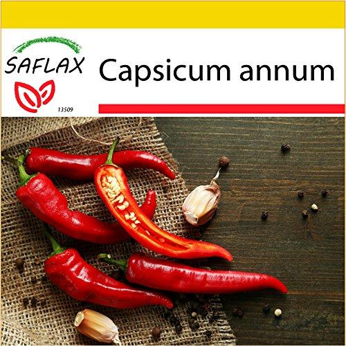 Galleria fotografica SAFLAX - Set per la coltivazione - Peperoncino di Cayenna - 20 semi - Capsicum annum