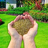 Andy's Aqua and Garden Plants PRO60-01 PRO 60-Fast Growing Premium Bio Treated Grass