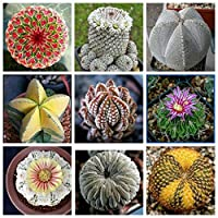 yongqxxkj 200Pcs Mixed Color Cactus Seeds,Seeds for Gardening Flowers/Vegetable,Natural Ornamental Planting,Easy Grow Tree Flower Planting Seeds Garden Potted Plants Decor