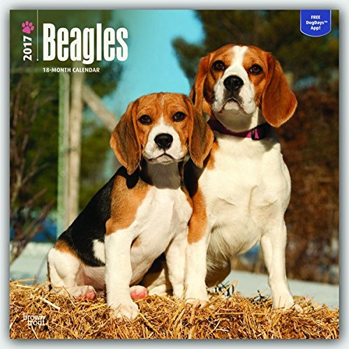 Beagles 2017 - 18-Monatskalender mit freier DogDays-App: Original BrownTrout-Kalender [Mehrsprachig] [Kalender] (Wall-Kalender) (Beagle-kalender)