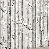 rustique moderne Forêt bouleaux Rouleau de papier peint Noir Blanc Woods 21en X 394en