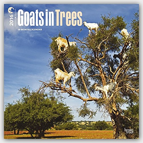 Goats in Trees 2016 Wall