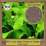 Hochwertige BIO Samen Winter Saatgut Gemüse - Große Auswahl & viele Sorten - aus natürlichem Anbau - aus Europa