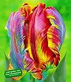 MyRedRose Regenbogen-Tulpen 'Blumex®'