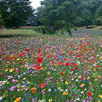 UK 100% Wild Flower Seed Mix Annual Meadow Plants Attracts Bees & Butterfly (50g) Pure Wildflower Seeds Mix 3 DEFRA Registered UK Seed