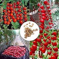 Lonlier Semillas de Tomate cherry 10/20/50 pcs Semillas Ecologicas para Jardín Huerto