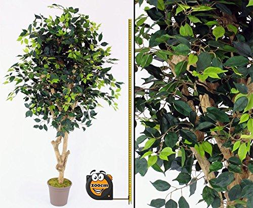 Kunstbaum Ficus Premium 200cm mit 1.716 grüne Blätter und Echtholzstamm mit Ästen