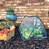 Pack of 3 - Large - 1.5m x 0.6m x 0.6m High - Garden Pop-Up UPVC Mini Greenhouse Poly Cloche Tunnel Bild 3