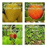 außergewöhnliche Erdbeeren -4 Arten - gesamt:(ca. 140 ++ Samen sortenrein verpackt) !!!