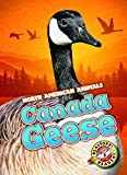 Canada Geese (Blastoff Readers. Level 3)