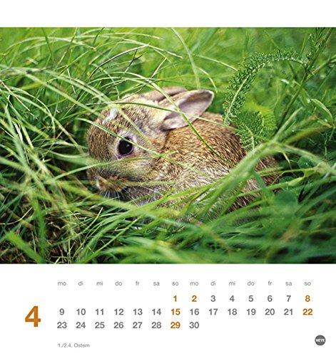 Kaninchen Postkartenkalender – Kalender 2018 - 5
