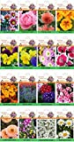alkarty winter flower seeds with growing...
