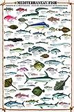 Close Up Mediterranean Fish Kunstdruck Fische des Mittelmeeres - Kunstdruck (61cm x 91,5cm)