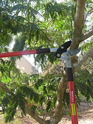 tabor-tools-gg12-amboss-astschere-fuer-trockenes-hartes-und-frisches-holz-baumschere-mit-ergonomisch-geformte-griffe-laenge-76cm-astdurchmesser-bis-50mm-extra-hohe-hebelkraft-praezises-messer-mi