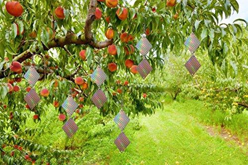 Reflective Bird Repellent Disks (Diamond) - Keep Birds Away