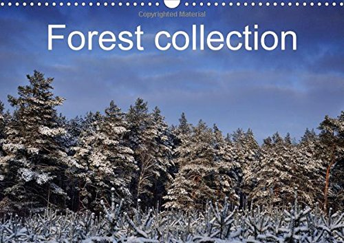 Forest collection (Wall Calendar 2016 DIN A3 Landscape): Unusual images of forest in Poland (Monthly calendar, 14 pages) (Calvendo Nature)