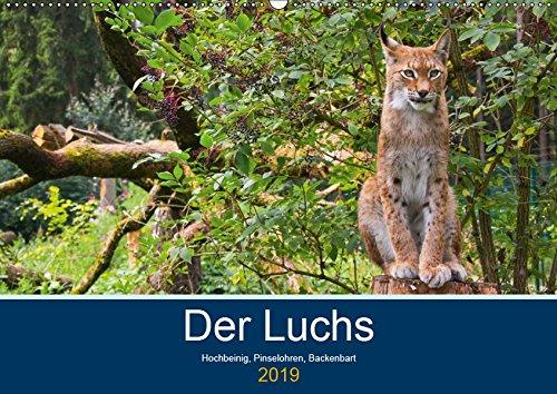 Der Luchs - Hochbeinig, Pinselohren, Backenbart (Wandkalender 2019 DIN A2 quer): Unsere größten und seltensten Katzen. (Monatskalender, 14 Seiten ) (CALVENDO Tiere)