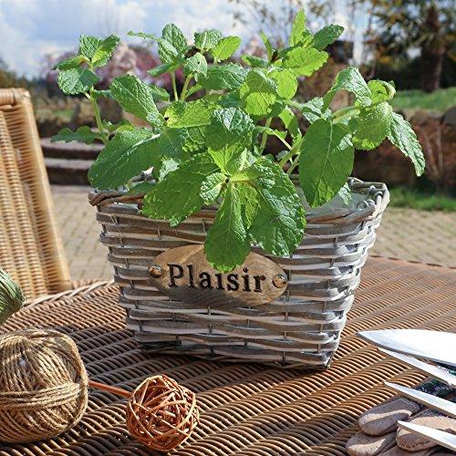 gebeizt Holz und Weiden Pflanzkasten, rechteckig–Eine ideal 5. Hochzeitstag Geschenk Idee–H12x W21x 14cm