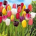 Natural Mente - 5 Stück Blumenzwiebeln Tulpen Mix, Farbe und Sorte gemischt, Tulpenzwiebeln, Frühjahrsblüher, Blumen von Natural Mente - Du und dein Garten