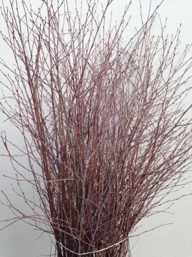 50-stems-of-natural-decorative-birch-90cms