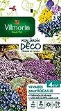 Vilmorin 5860943 Pack de Graines Fleur Vivace pour Rocaille