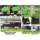 30 x Talla S + 30 x Tamaño L Glossostigma elatinoides Hemianthus Acuario Semillas Agua Planta Nuevo #254