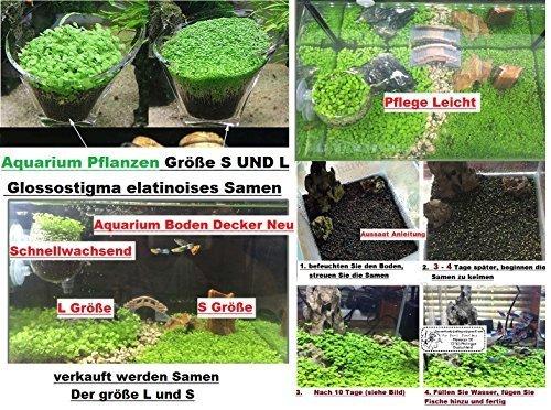 30 x Größe S + 30 x Größe L Glossostigma elatinoides Hemianthus Aquarium Samen Wasser Pflanze Neu #254