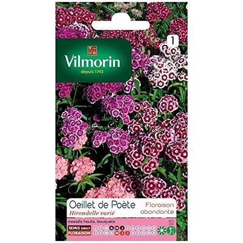Vilmorin - Sachet graines Oeillet de poète Hirondelle varié