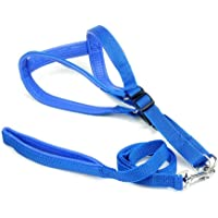 Pet Needs Soft Padded Pet Harness and Leash Set-Blue-for Small Puppy-(0.75 INCH)